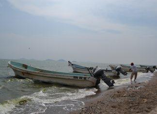 'Se avecina muerte del sector pesquero', revelan corrupción en Conapesca pagina 3