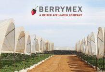 Revelan historias de explotación jornalera en Berrymex, productora de frutos rojos pagina 3