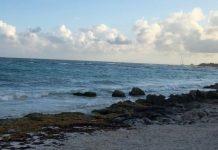 Descarta Semaedeso sargazo en laguna costera conocida como Playa San Vicente, Juchitán pagina 3