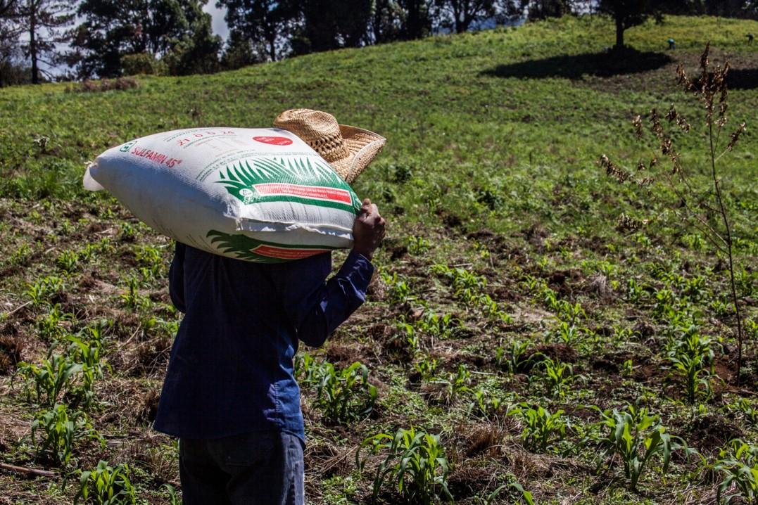 Tropieza la 4ta transformación en Guerrero con el fertilizante pagina 3