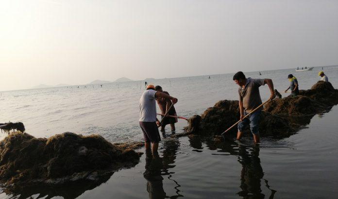 Pescadores de Playa Vicente limpiando el salgazo.