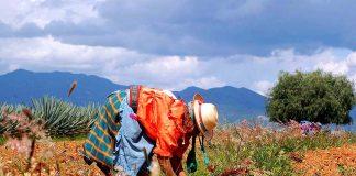 Etnias Oaxaca es fiesta, diversión y cultura los 365 días del año pagina 3