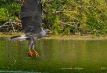 Piden que La Laguna de Bacalar sea Área Natural Protegida pagina 3