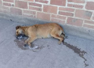 Regidora de Mitla condena masacre de perros envenenados, mientras, el presidente calla pagina 3