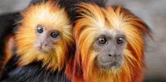Ciencia asegura que crisis de coronavirus está relacionada con la devastación de los ecosistemas